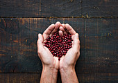 Hands holding dry beans