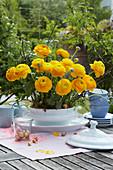 Blütengesteck aus gelben Ranunkeln in weißer Suppenschüssel