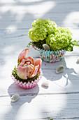 Kleine Frühlingsdekoration mit Hortensienblüten und gefüllter Tulpe in Muffinförmchen