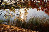 Fischteich im Herbst