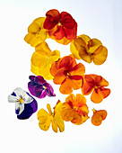 Assortment of edible flowers