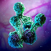 T cells attacking cancer cells, illustration