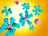 Covid-19 ferritin nanoparticle vaccine, illustration