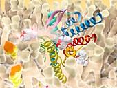 Delta opioid receptor, illustration