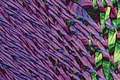 Caesium chloride, polarised light micrograph