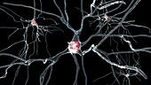 Human brain nerve cells, illustration