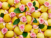 Lemons and pink rose petals with leaves (whole image)
