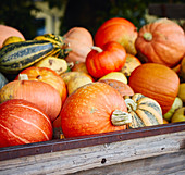 Different pumpkins on a wooden cart