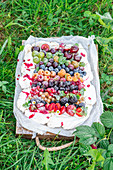 Rainbow pavlova with summer berries