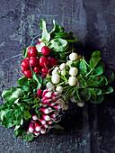 Radishes - Scarlet Globe, White Globe and French Breakfast