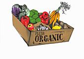 Bio-Schachtel mit Obst und Gemüse (Illustration)