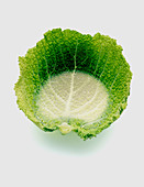 Cabbage with water