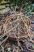 Korb mit Zweigen: Kornelkirsche 'Gourmet-Dirndl'