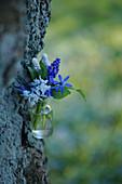 Kleiner Strauß aus Puschkinie, Traubenhyazinthen und Blausternchen am Baum