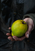 Hands holding quince