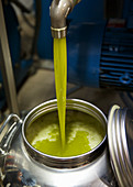 Extra virgin olive oil pouring into drum