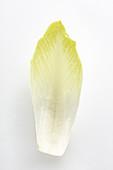 A chicory leaf