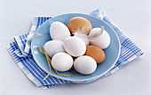White and brown eggs with a feather on a light blue plate