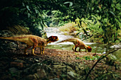 Psittacosaurus dinosaurs, illustration