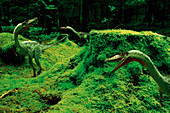 Coelophysis dinosaurs, illustration