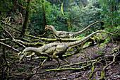Dilophosaurus dinosaurs, illustration