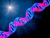 DNA (deoxyribonucleic acid), molecular model