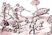 Hunting wild boar, illustration