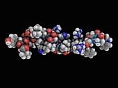 Pleurocidin, antimicrobial protein, molecular model