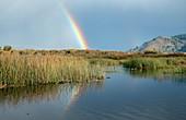 Rainbow over marsh at Carmel River State Beach, USA