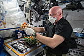 Veggie plant growth facility on the ISS