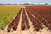 Flower farming, Israel