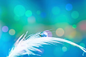 Water on a bird's feather