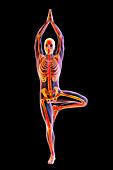 Yoga tree pose, illustration
