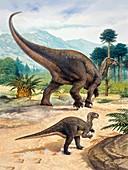 Iguanodon dinosaur, illustration