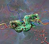 DNA transcription, illustration