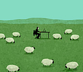 Man working in a field of sheep, illustration