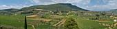 Vineyards of Nemea, greece.