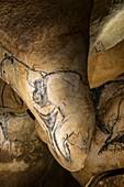 Cave art drawing, Chauvet Cave replica, France