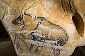 Reindeer drawing, Chauvet Cave replica, France