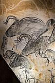 Aurochs panel drawing, Chauvet Cave replica