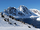 Chinstrap penguin colony near Orne Harbour, Antarctica