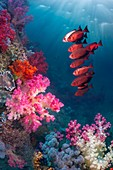 Coral reef, composite image