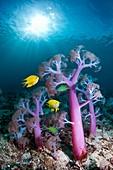 Soft coral, composite image