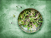 Sprouts and microgreens on a plate and a green background