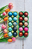 Colorful dyed Easter eggs in blue and red shades