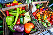 Colorful organic vegetables