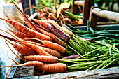 Colorful organic carrots