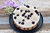 Vegan blueberry cheesecake with a hazelnut and blueberry base
