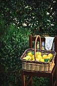 Lemons in a basket in garden