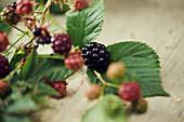 Blackberry branch